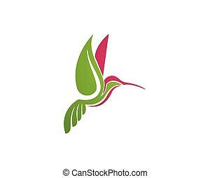 colibrí, logotipo, y, símbolos, iconstemplate, app