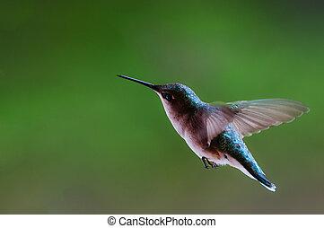 colibrí, vuelo