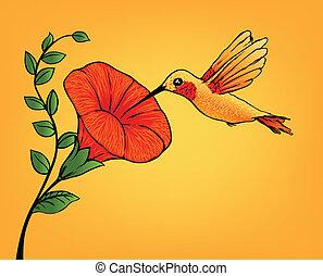 colibrí, y, flor