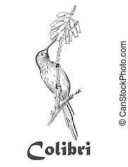 colibrí, y, flor, libro colorear, para, adultos, vector, illustration.