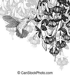 colibrí, y, fucsia