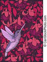 colibrí, y, fucsia, flores