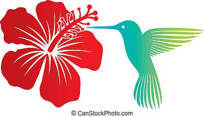 colibrí, y, rojo, hibisco, flor