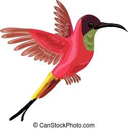 colibri, icono, estilo, caricatura, pájaro