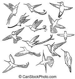 colibri, tekening, set, gemaakt, in lijn, ar