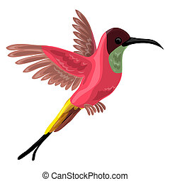 colibri, vogel, pictogram, spotprent, stijl