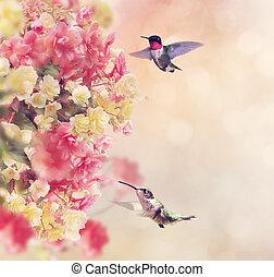 colibris, fleurs