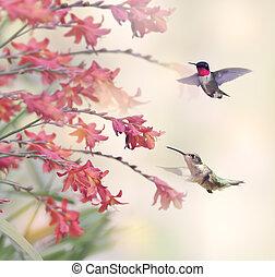 colibris, fleurs, rouges