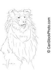 colie, dessin crayon, portrait, chien