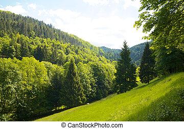 colina, pretas, prado, floresta