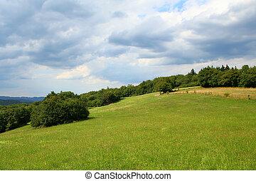 colina verde, pasto, campo