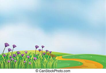 colinas, cima, flores, jardín, violeta
