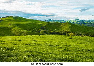 colinas, de, el, nueva zelandia
