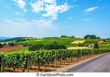 colinas, de, viñas