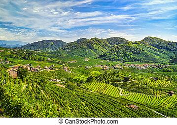 colinas, panorama., italia, veneto, viñas, prosecco, valdobbiadene, unesco, sitio.