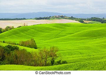 colinas verdes, de, tuscany, sob, a, céu azul
