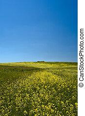 colinas verdes, sob, a, azul, verão, céus
