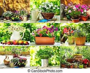 collage, été, fleurs
