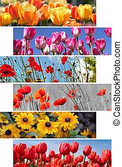 collage, été, fleurs, printemps
