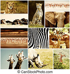 collage, animali, safari, africano