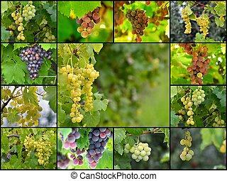 collage, av, a, olika, grapes., mat, begrepp