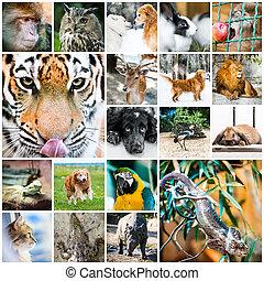 collage, av, djuren