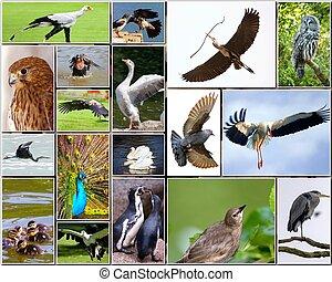 collage, av, fåglar