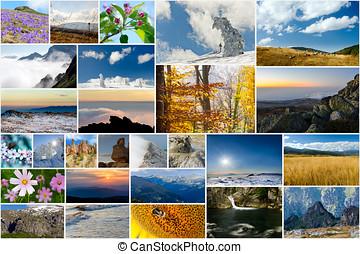 collage, av, natur, foto