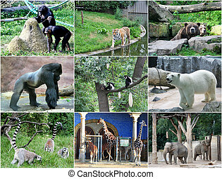 collage, av, olik, djuren