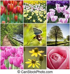 collage, bloem
