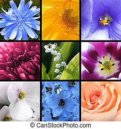 collage, bloemen