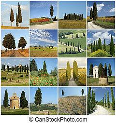 collage, cipressi, italiano