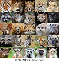collage, con, animale, ritratto