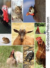 collage, con, diferente, cultive animales