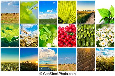 collage, concepts., żniwa, zboże