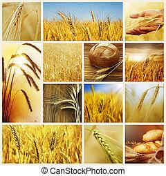 collage, concepts., wheat., raccogliere, cereale