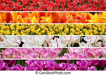 collage, couleurs arc-en-ciel, tulipes