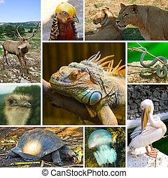 collage, de, animales