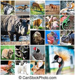 collage, de, animaux