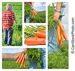 collage, de, carotte, paysan, sur, sien, ferme
