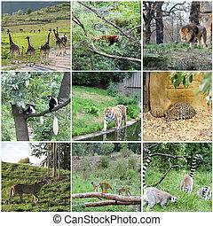 collage, de, diferente, animales