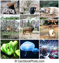 collage, de, différent, animaux, dans, berlin, zoo, allemagne