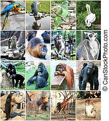 collage, de, différent, animaux