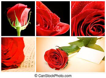 collage, de, divers, roses rouges