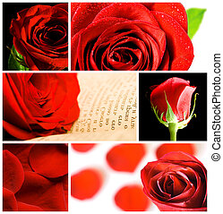 collage, de, vario, rosas rojas
