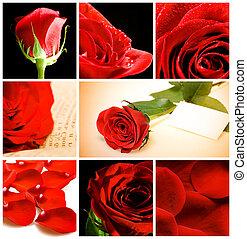 collage, de, vario, rosas rojas