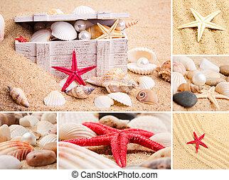 collage, de, verano, seashells., collec