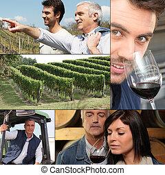 collage, di, winemakers, vino, e, vigne