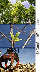 collage, disboscamento, registrare, legno