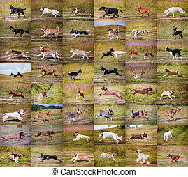 Collage dogs running